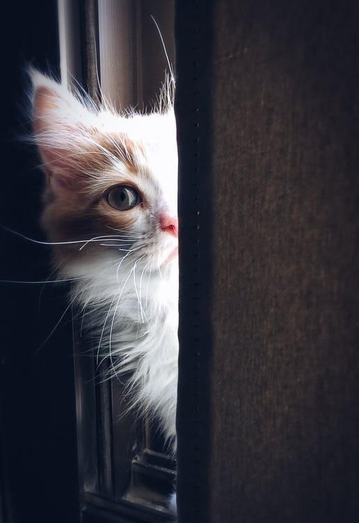 gattino a metà